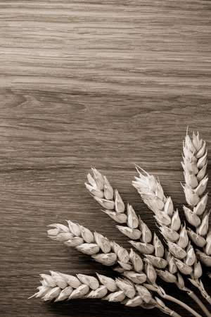 ears of wheat on wooden background photo