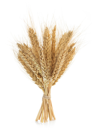 espigas de trigo aislados sobre fondo blanco Foto de archivo