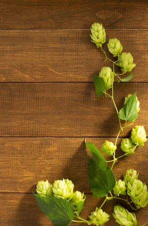 hop cones: hop cones on wooden background Stock Photo