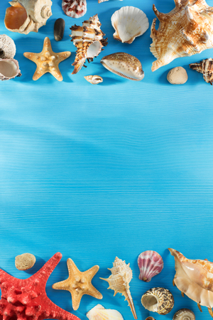seashell: seashell on wooden background texture