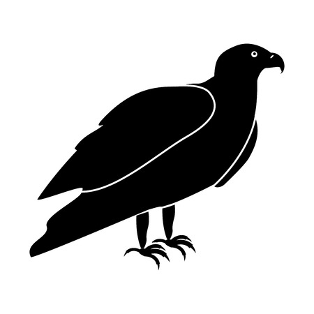 goshawk: Eagle