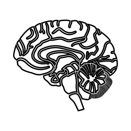 Brain black icon . Illustration