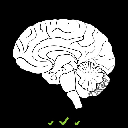 Brain it is white icon . Flat style Illustration