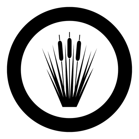 Reed Bulrush Reeds Club-rush ling Cane rush icon in circle round black color vector illustration flat style simple image Иллюстрация