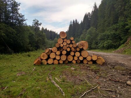 Spruce logs are harvested and prepared for transportation in Karpathians forest Pine trees trunks felled timber industry Landscape with large woodpile nature