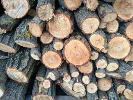Logs crosscuts on the timber cutting Piles of cut wood tree trunk textures nature