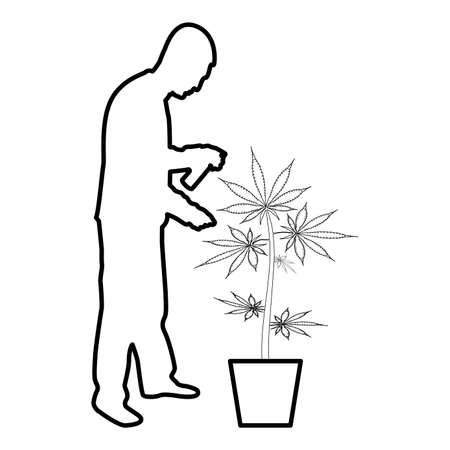 Man caring for marijuana plant in pot Water spraying using hand sprinkler Watering Gardening harvesting concept at home contour outline black color vector illustration flat style simple image 矢量图像