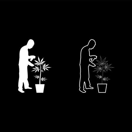 Man caring for marijuana plant in pot Water spraying using hand sprinkler Watering Gardening harvesting concept at home silhouette white color vector illustration solid outline style simple image