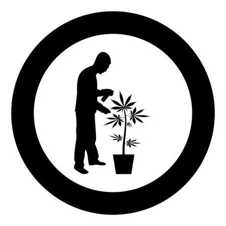 Man caring for marijuana plant in pot Water spraying using hand sprinkler
