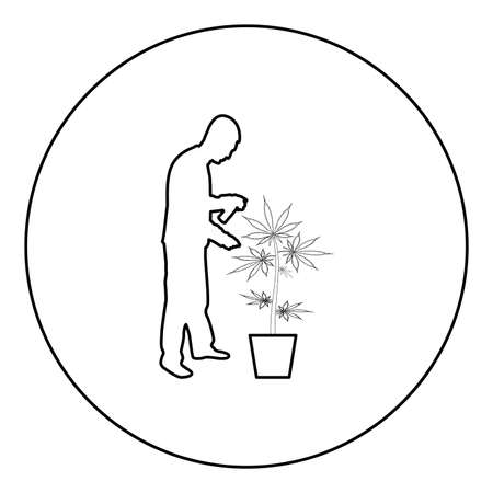 Man caring for marijuana plant in pot Water spraying using hand sprinkler Watering Gardening harvesting concept at home  silhouette in circle round black color vector illustration contour outline style image simple image