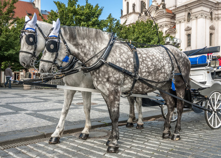 excursions: Czech Republic, Prague , Old Place . Horse-drawn carriage for walks and excursions in the streets of Prague. Clear sunny spring day.