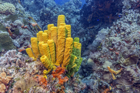 Maldives. The freakish coral reefs of the shelf amaze with their colorful and abundance of exotic fish. Stock Photo