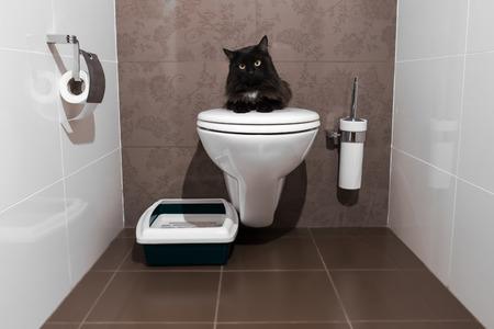 papel higienico: gato negro en el inodoro Foto de archivo