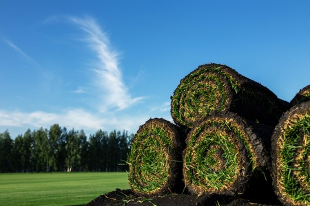 Rolls of fresh grass turf and blue sky