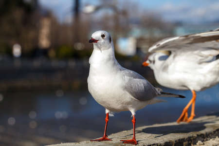 parapet: Gulls on the parapet the urban river on city background