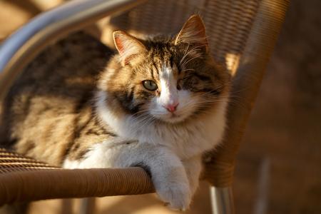 pitiful: pitiful one-eyed cat lies in evening sunlight