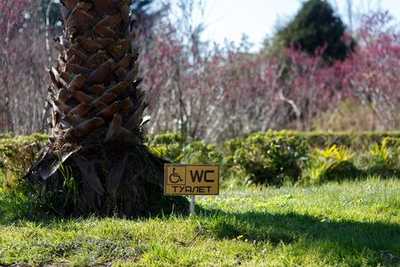 WC plate on the grass next to a tree photo