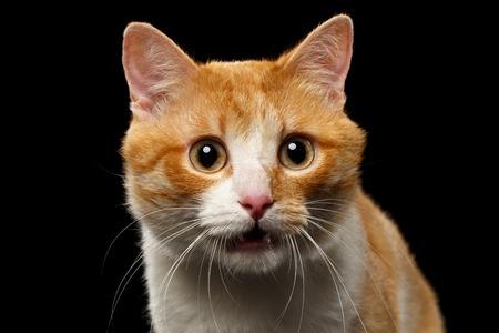 Close-up Verrast Ginger Kat met open mond op zwarte achtergrond Stockfoto