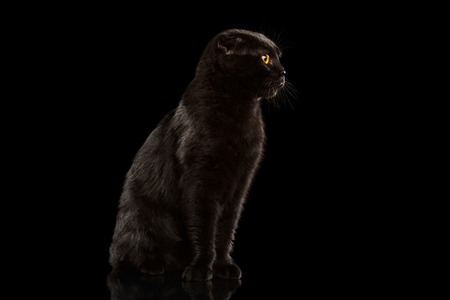 grumpy: Black Cat Sitting on Mirror and Grumpy Looking isolated