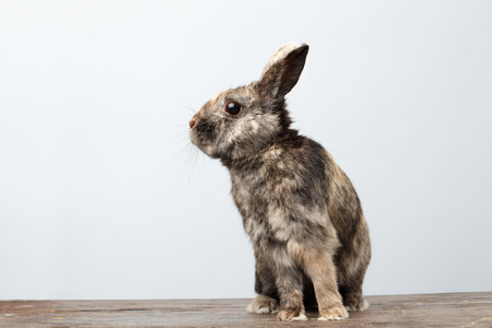 horrify: Cute Little rabbit with Brown Fur Sitting on Wood and frightened, white Background