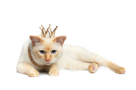 Sad Mekong Bobtail King Cat met blauwe ogen en kroon op hoofd, liegen, geïsoleerde witte achtergrond, bont vacht Stockfoto