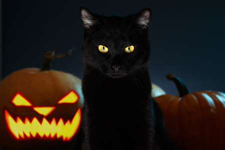 spooky eyes: Portrait of Black Cat with Halloween pumpkin on Background and scary spooky Eyes, creepy horror holiday, superstition evil animal Stock Photo
