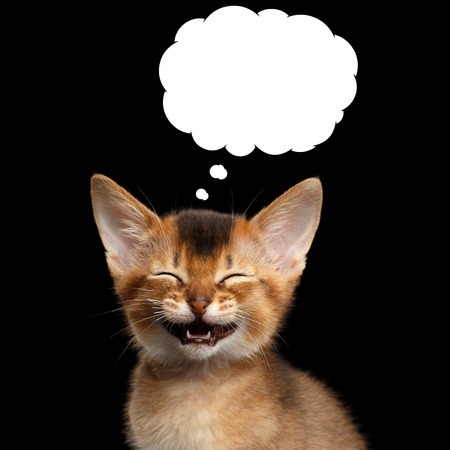 Laughs Abyssinian Kitty with closed eyes think funny in cloud on Isolated Black Background Фото со стока