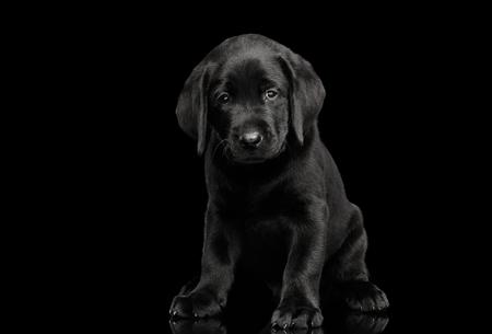かわいいラブラドール ・ リトリーバーの子犬座っていると悲しい探してカメラで黒の背景に分離した正面