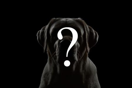 Symbol Question on Portrait of Labrador retriever dog isolated black background