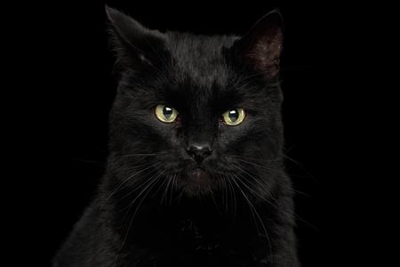 孤立した暗い背景、正面に腹が立つ顔と不思議な黒い猫の肖像画