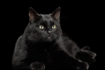 Black Cat Lying on Isolated Dark Background