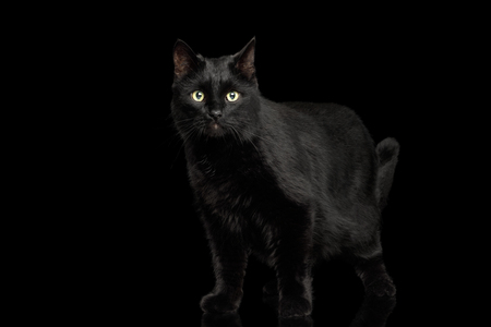 Black Cat Standing on Isolated Dark Background
