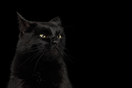 Portrait of Curious Black Cat making face on Isolated Dark Background, front view Stock Photo