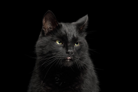 Portrait of Black Cat making face on Isolated Dark Background, front view