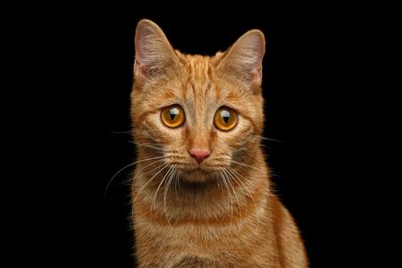 巨大な悲しいことに目で、孤立した黒背景、正面にカメラで探して生姜猫の肖像画