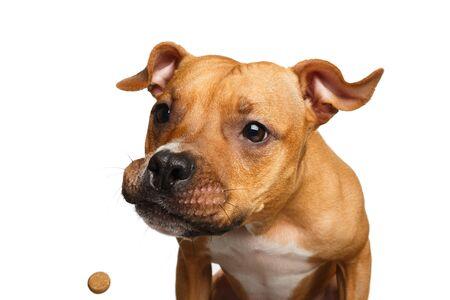 Portrait drôle de métis rouge attrape chien traite avec sa bouche ouverte isolée sur fond blanc Banque d'images - 82686971