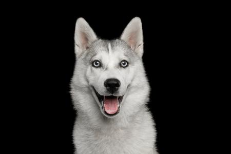 검정 배경, 전면 뷰 격리 된 거친 강아지의 행복 한 초상화