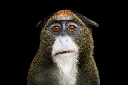 Close-up Portret van Grappige De Brazzas Aap op Geïsoleerde Zwarte Achtergrond