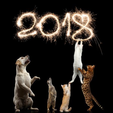 猫、犬および新しい 2018 年に向けてミーアキャットを飾る花火桁または分離の黒背景にクリスマスを盗もうとする子猫 写真素材