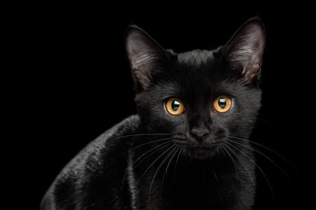 孤立した背景に輝く毛皮を持つ黒い子猫の肖像画、正面図 写真素材