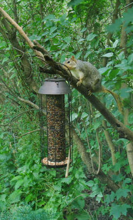 squirrel Reklamní fotografie