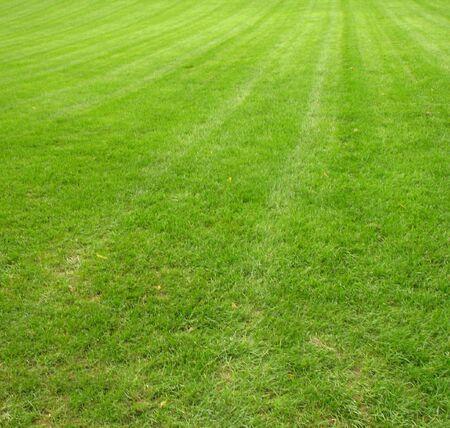 新たに刈られた、手入れの行き届いた緑豊かな、緑の芝生