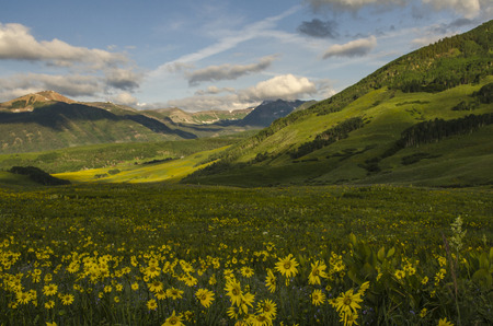 colorado rocky mountains: Where The Wild Flowers Grow
