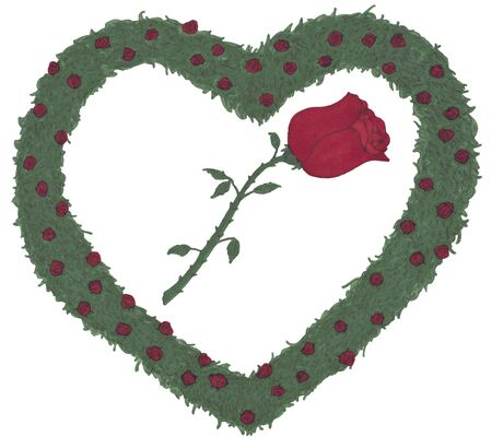 rosaceae: A single red rose with stem and leaves is surrounded by lots of small roses with rose leaves of rose bushes arranged in the shape of a heart.  Stock Photo