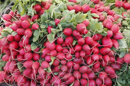 Many bunches of red radishes for sale are displayed outside at a Farmers Market. photo