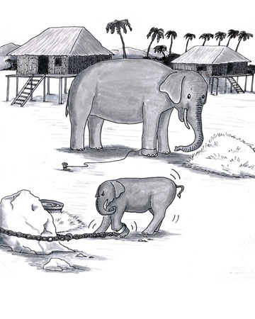 Older and younger pachyderm; baby attached to heavy chain, adult trained to stay with just rope.