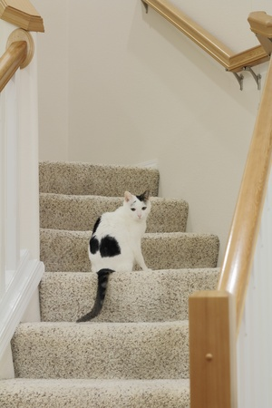 Cute black and white cat sitting on the stairs inside the foyer of a home.