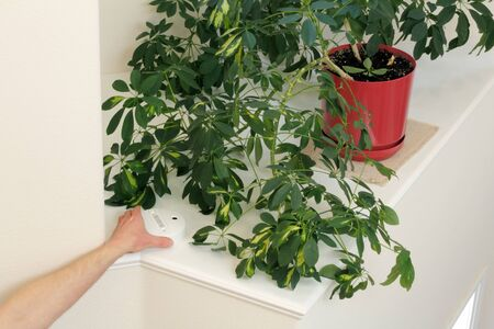 Hand of a man touching a carbon monoxide detection device on a foyer plant shelf in a home.