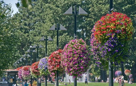 flower baskets: BEAVERTON, OREGON - AUGUST 12: Vibrant hanging flower baskets and lots of people hang out on August 12, 2010 in Beaverton, Oregon. Beaverton was named one of top 100 walking cities in America by Prevention magazine.