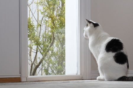 Kitty Cat looking out the window by the front door of a home while sitting on the floor in the foyer during the day. Stock Photo - 12391045